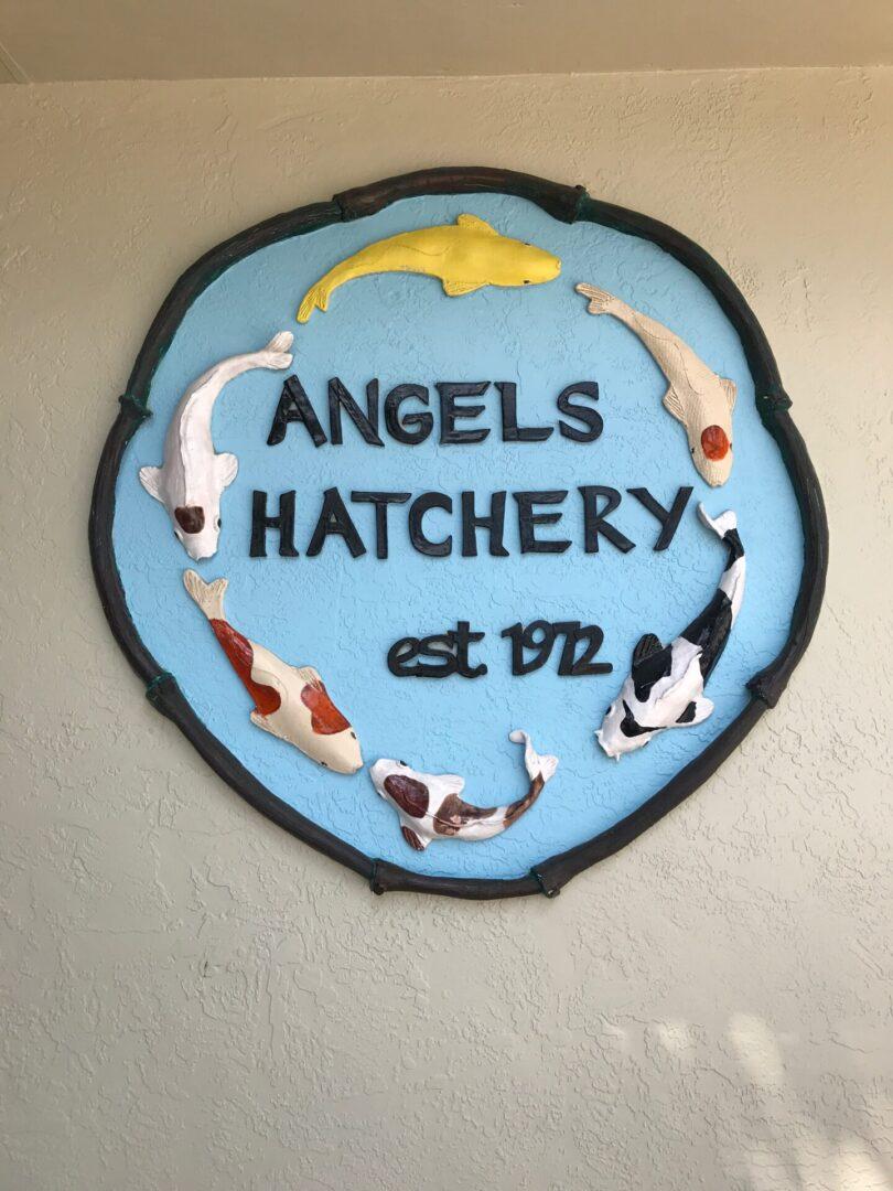 Angels Hatchery